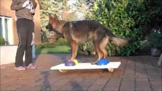 видео Фитнес для собак