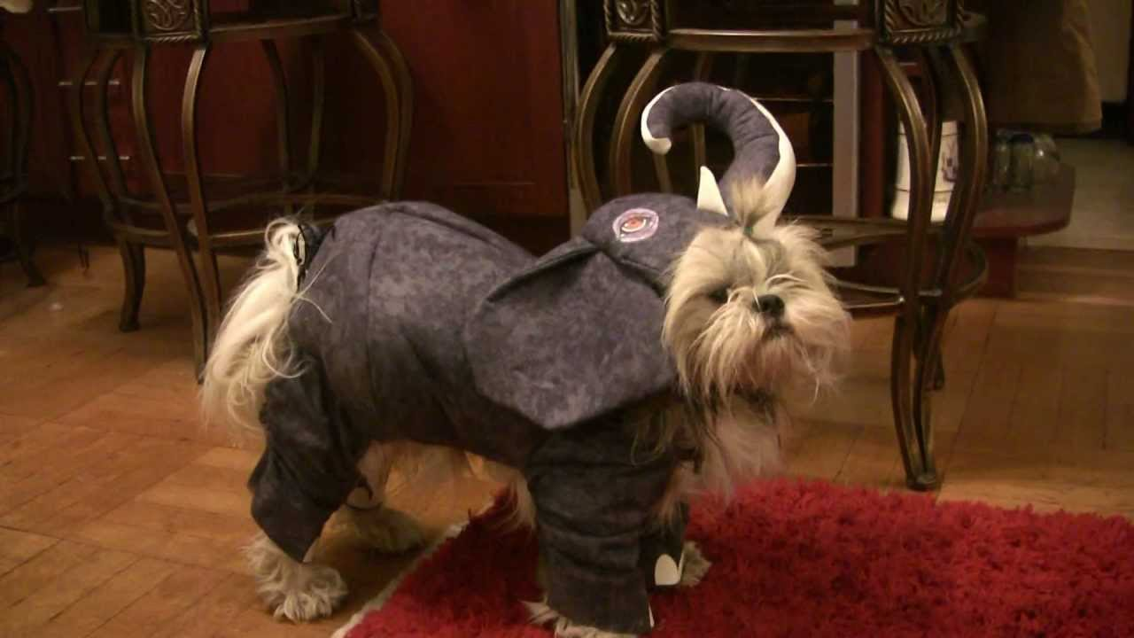 & Funniest Dog in Elephant Costume - YouTube