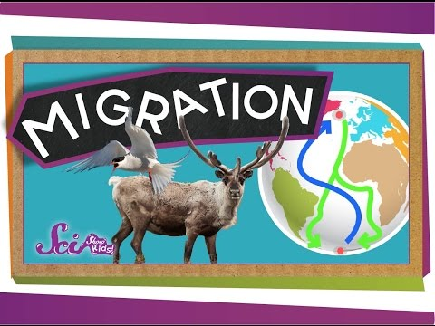 Migrations: Big Animal Trips | Science for Kids
