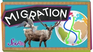 Migrations: Big Animal Trips