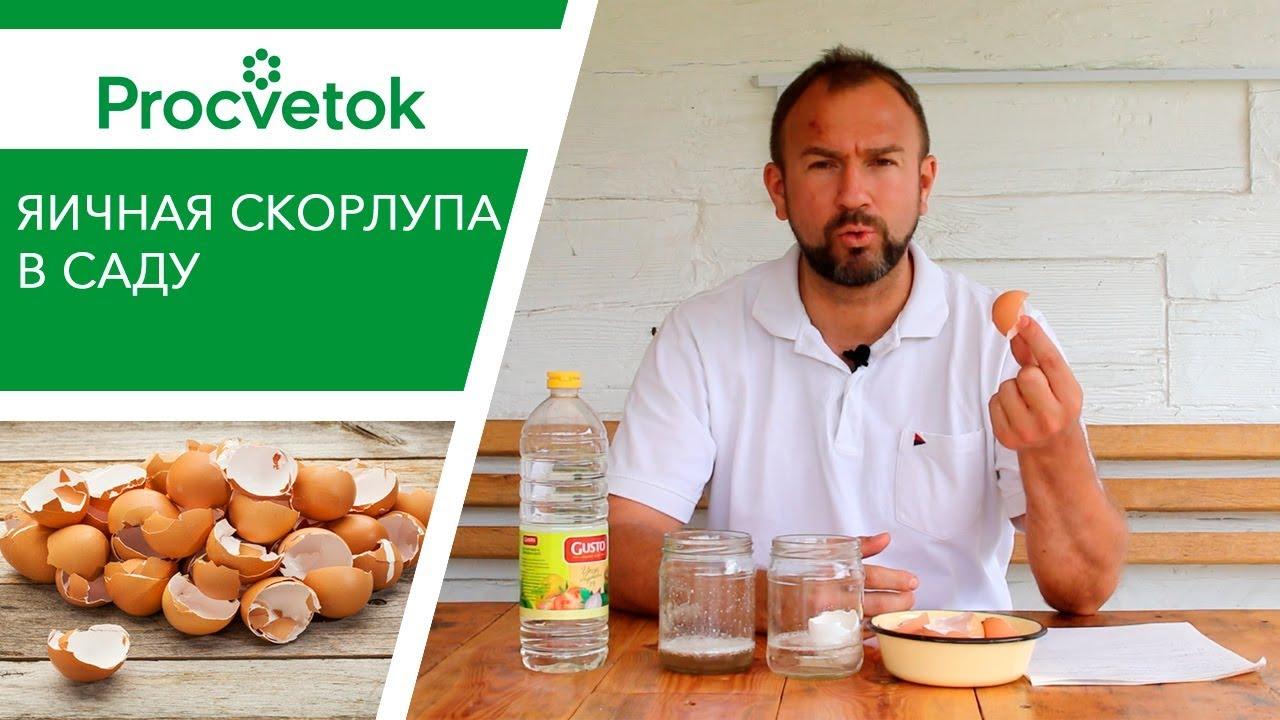 Яичная скорлупа как удобрение. Надо ли вносить яичную скорлупу в почву в огороде?
