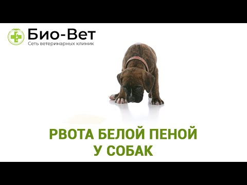 кашель у собаки белой пеной