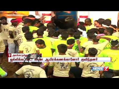 Madurai Alanganallur Jallikattu   10-02-2017   News7 Tamil