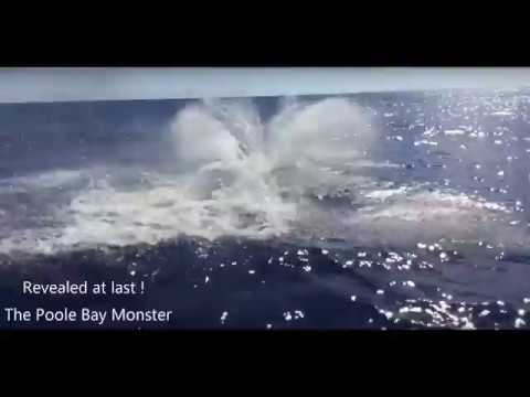 Poole Bay Monster