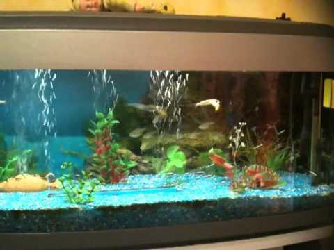 acquario pet company youtube