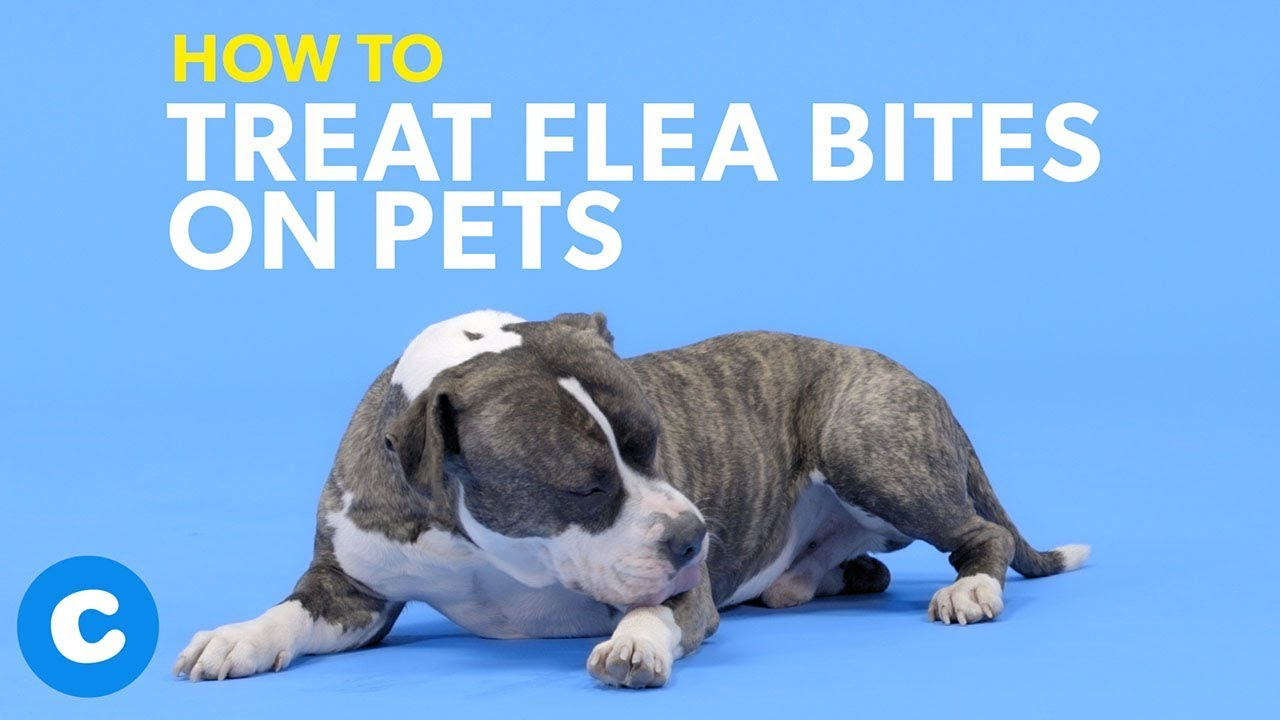 How To Treat Flea Bites On Dogs Cats