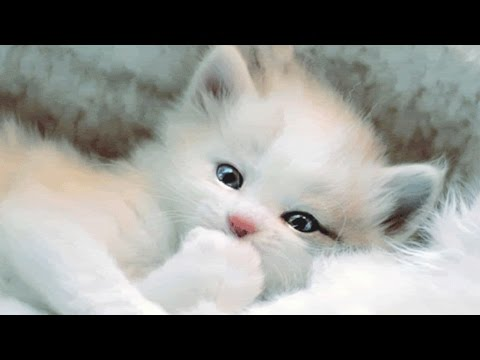 Cute kittens and puppies - Cute kittens meowing | Part 3