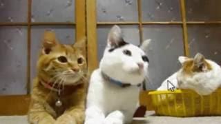 Прикольные анимации картинки с кошками, смотреть майский прикол