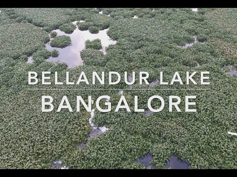 Cleantec infra: Bangalore Bellandur Lake Deweeding May 2017