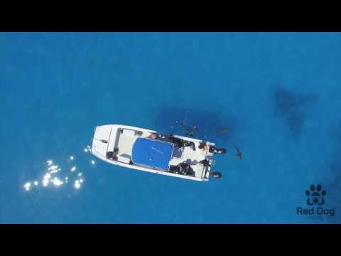 Dive Exuma shark reef 2017 Bahamas