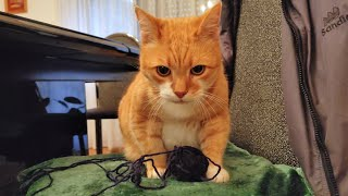 4 Reasons Why You Should Play With Your Cat Right Now
