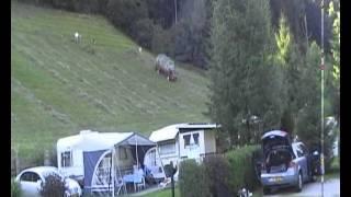 Hooien in het Zillertal