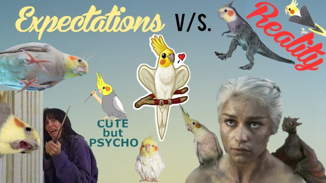 Expectations Vs. Reality | Birds Version | Happy Cockatiels | Cockatiel Funny Videos are the BEST