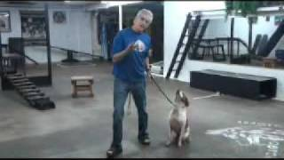 Chicago Canine Academy- Bo
