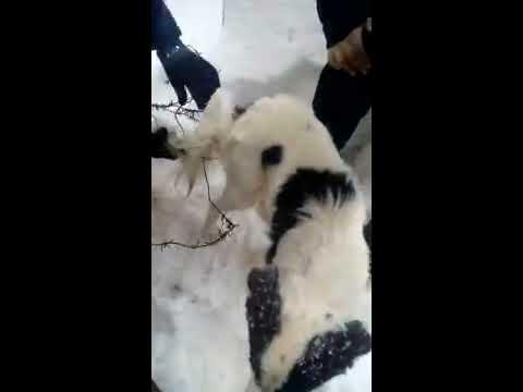 Спасли собаку от смерти