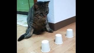 Кота не проведёшь | Cat not fool