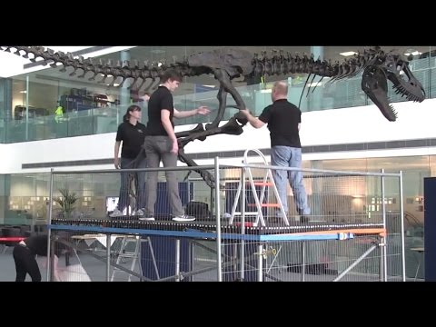 How to Build a Dinosaur: A Gorgosaurus Comes to Diamond Light Source