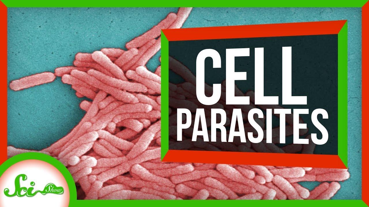 Mikroparasites láthatatlan halál