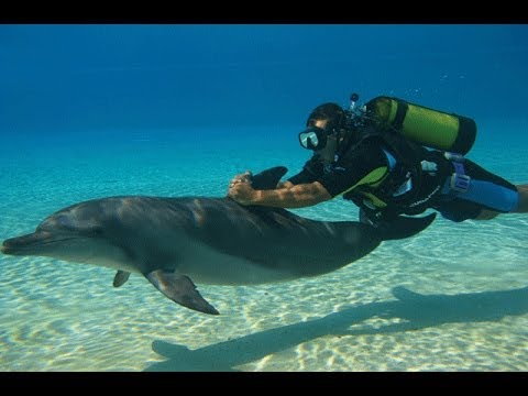Diving with dolphins at Atlantis in Dubai