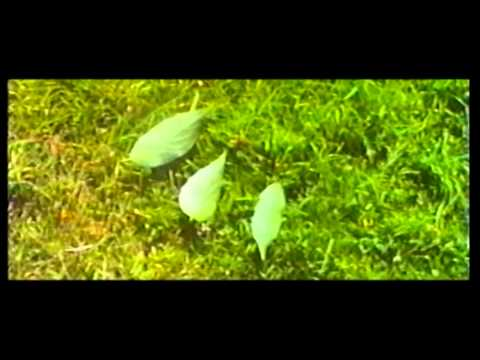 The Darkness Of The Leafy Field Original Movie