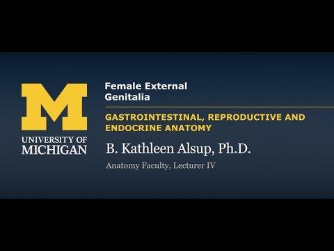 Reproductive System: Female External Genitalia - YouTube