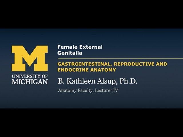 Reproductive System Female External Genitalia Youtubedownloado