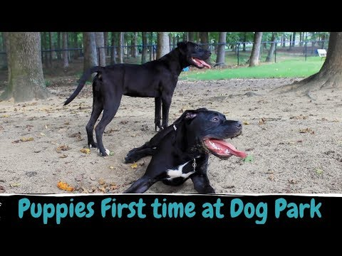 Puppies First Time at a Dog Park