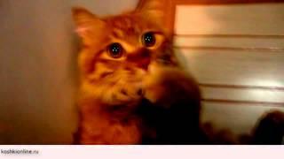 Такие смешные кошки-чудики - чудят на каждом углу - просто умора!!!
