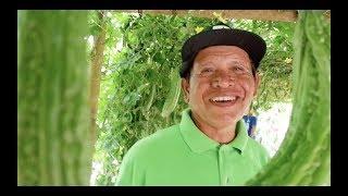 How to grow Bitter gourd / ampalaya in Sagbayan, Bohol