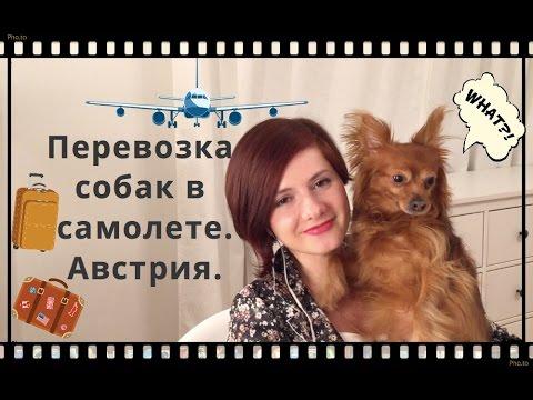 Перевозка собаки в самолете .Из Москвы в  Австрию.