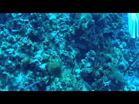 "Scuba Diving ""Eagles Nest"" in Grand Cayman"