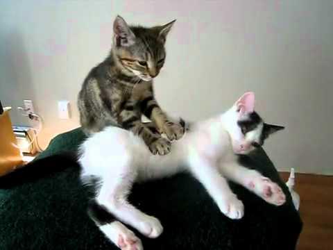 Глисты у кошек и котят. Как избавиться от глистов Кошка 63
