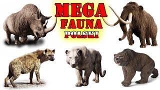 Prehistoryczne MEGA Zwierzęta Polski