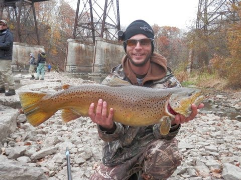 Monster Brown Trout Fishing In Western New York
