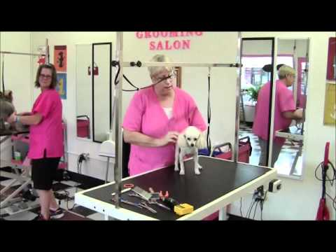 Hot Dog Grooming Angleton Texas