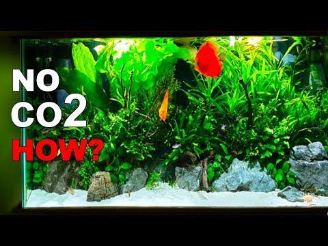 No co2 !! AMAZING GROWTH...HOW?? 4 MONTH Old Planted Aquarium AQUASCAPE