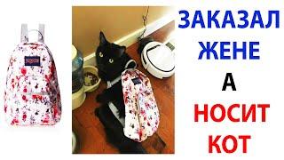 Мемы и Приколы с Котами 2021 года  Подборка смешные мемчики про котов за 19 Октября #shorts