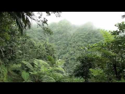 Nevis Rainforest