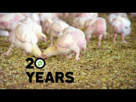 Celebrating 20 years of RSPCA Approved - 45 sec