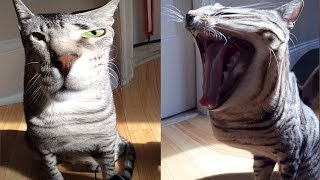 STRANGE CATS