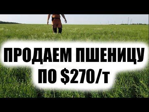 Как выгодней продать ячмень и пшеницу. Изучаем цены + обзор льна