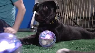 Sphero Pup-E-Bowl