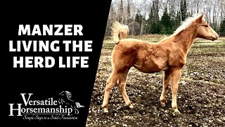 MANZER LIVING THE HERD LIFE // Versatile Horsemanship