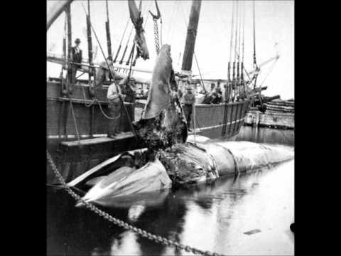 3D Photographs of Whaling Ships in Massachusetts Documentary (1800's)