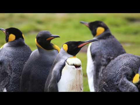 Falkland Islands, South Georgia, and Antarctic 2016