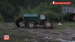 Медведь пришел на базу отдыха. No comment