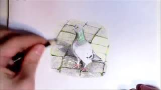 Pigeon Drawing (Rock Pigeon) - Time Lapse