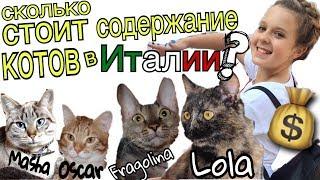Сколько стОит содержать кота в Италии? 🙀🇮🇹 💰