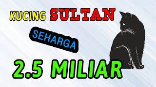 KOLEKSI KUCING SULTAN SEHARGA 2.5 MILIAR!!!