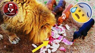 TOP 7 ANIMALES QUE ESCAPARON DE LAS GARRAS DE LA MUERTE